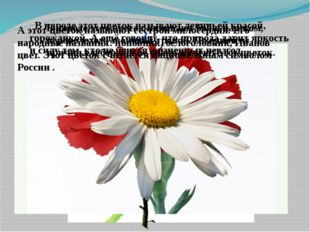 В народе этот цветок называют бобыльником, переполохом, звоновой травой. По о