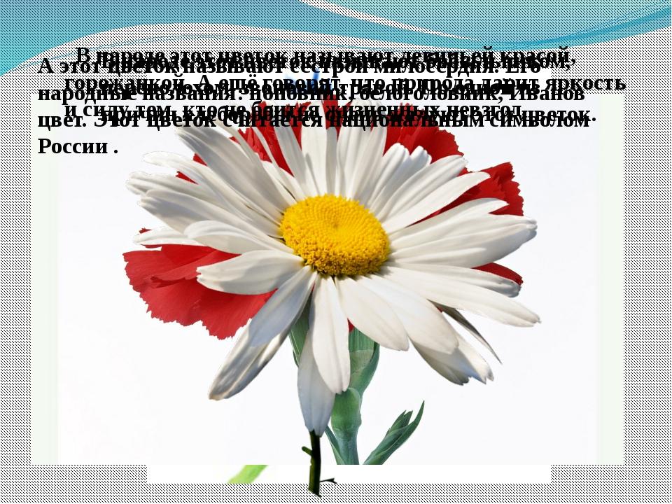 В народе этот цветок называют бобыльником, переполохом, звоновой травой. По о...