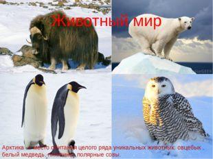 Животный мир Арктика — место обитания целого ряда уникальных животных: овцебы