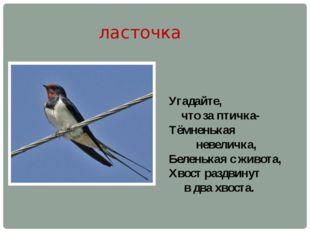ласточка Угадайте, что за птичка- Тёмненькая невеличка, Беленькая с живота, Х