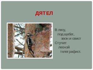 ДЯТЕЛ В лесу, под щебет, звон и свист Стучит лесной телеграфист.
