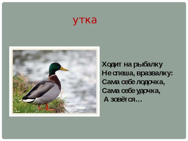 утка Ходит на рыбалку Не спеша, вразвалку: Сама себе лодочка, Сама себе удочк...