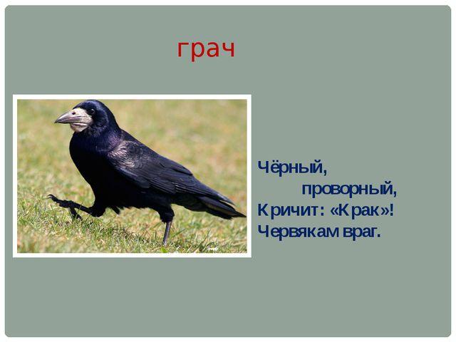 грач Чёрный, проворный, Кричит: «Крак»! Червякам враг.