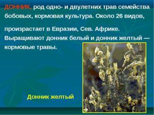 ДОННИК, род одно- и двулетних трав семейства бобовых, кормовая культура. Окол