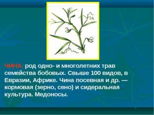 ЧИНА, род одно- и многолетних трав семейства бобовых. Свыше 100 видов, в Евра