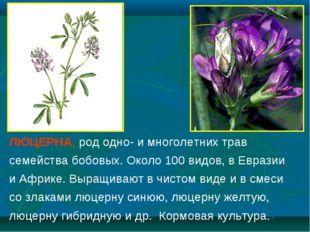 ЛЮЦЕРНА, род одно- и многолетних трав семейства бобовых. Около 100 видов, в Е