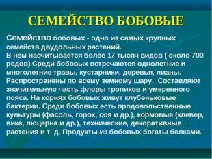 СЕМЕЙСТВО БОБОВЫЕ Семейство бобовых - одно из самых крупных семейств двудольн