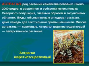 АСТРАГАЛ, род растений семейства бобовых. Около 2000 видов, в умеренном и суб