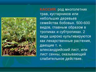 КАССИЯ, род многолетних трав, кустарников или небольших деревьев семейства бо