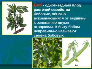 Боб - одногнездный плод растений семейства бобовых, обычно вскрывающийся от в