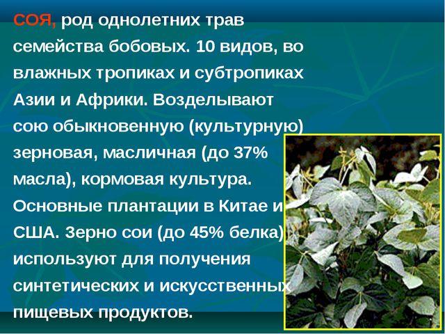 СОЯ, род однолетних трав семейства бобовых. 10 видов, во влажных тропиках и с...