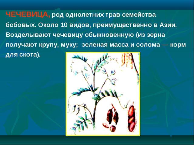 ЧЕЧЕВИЦА, род однолетних трав семейства бобовых. Около 10 видов, преимуществе...
