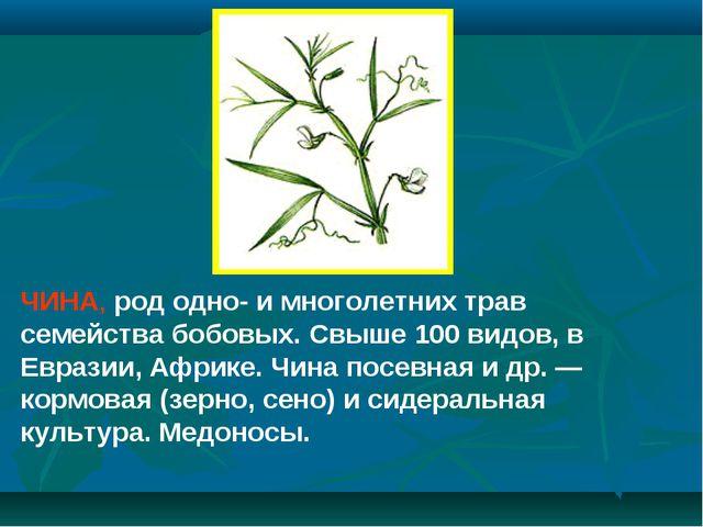 ЧИНА, род одно- и многолетних трав семейства бобовых. Свыше 100 видов, в Евра...