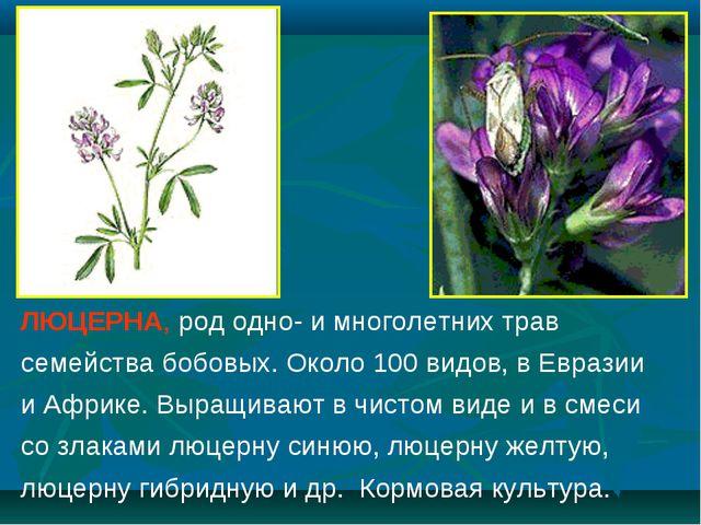 ЛЮЦЕРНА, род одно- и многолетних трав семейства бобовых. Около 100 видов, в Е...