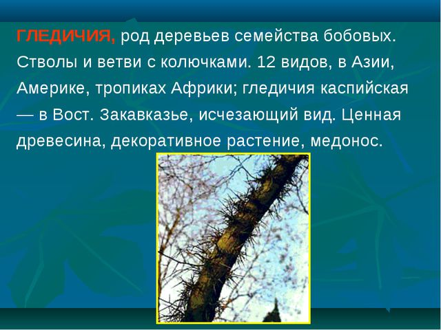 ГЛЕДИЧИЯ, род деревьев семейства бобовых. Стволы и ветви с колючками. 12 видо...