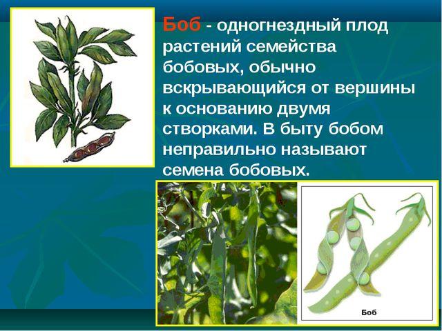 Боб - одногнездный плод растений семейства бобовых, обычно вскрывающийся от в...