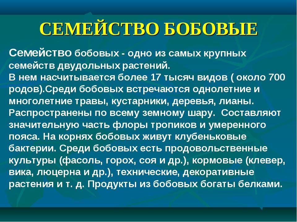 СЕМЕЙСТВО БОБОВЫЕ Семейство бобовых - одно из самых крупных семейств двудольн...