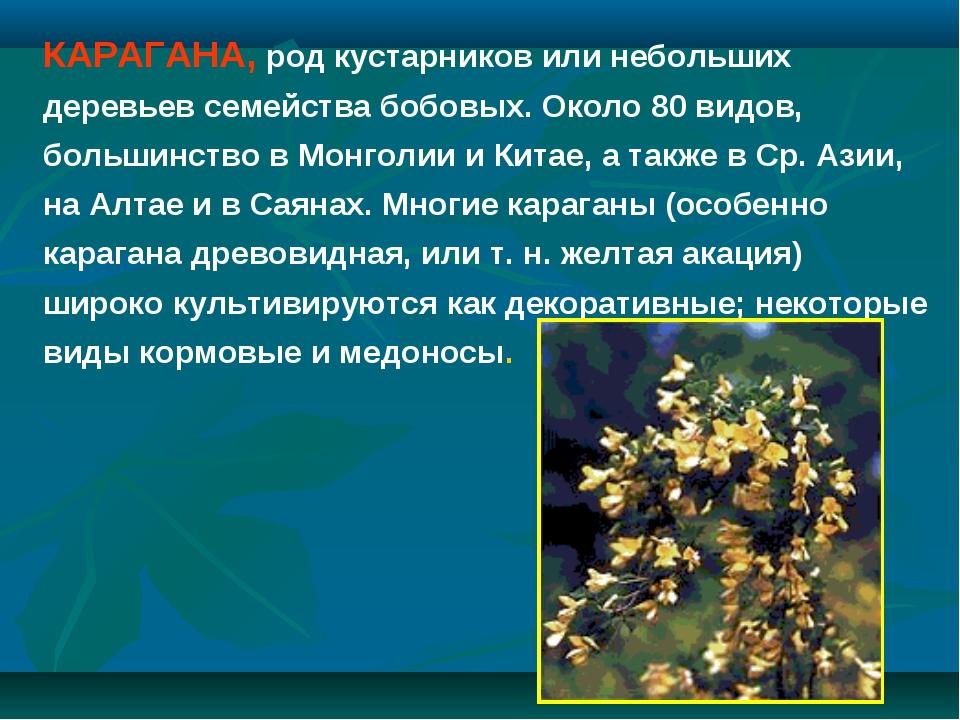 КАРАГАНА, род кустарников или небольших деревьев семейства бобовых. Около 80...