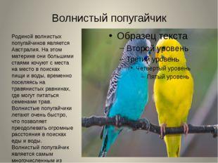 Волнистый попугайчик Родиной волнистых попугайчиков является Австралия. На эт