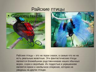 Райские птицы Райские птицы – это не герои сказок, а самые что ни на есть реа