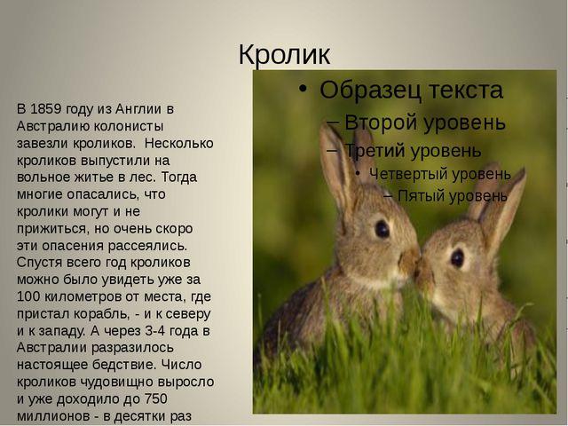 Кролик В 1859 году из Англии в Австралию колонисты завезли кроликов. Несколь...