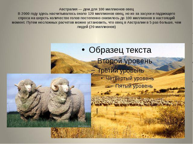 Австралия — дом для 100 миллионов овец В 2000 году здесь насчитывалось около...
