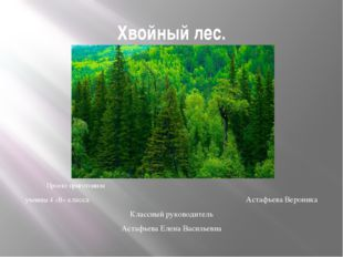 Хвойный лес. . Проект приготовила ученица 4 «В» класса Астафьева Вероника Кла