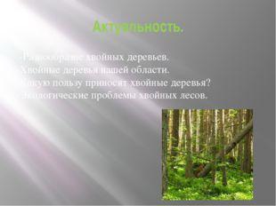 Актуальность. -Разнообразие хвойных деревьев. -Хвойные деревья нашей области.