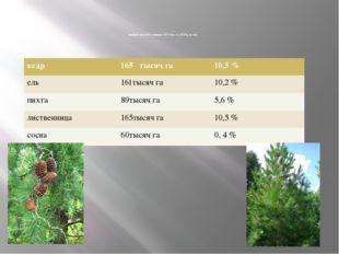 Хвойные леса ЕАО занимают 587,4 тыс. га. (37.2%), из них: кедр 165 тысяч га
