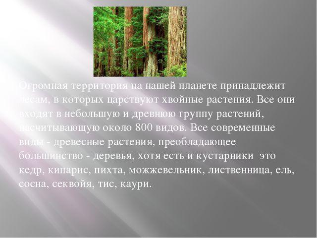 Огромная территория на нашей планете принадлежит лесам, в которых царствуют...