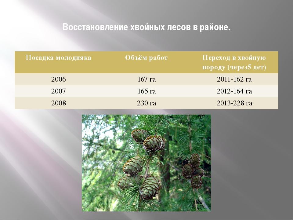 Восстановление хвойных лесов в районе. Посадка молодняка Объём работ Переход...