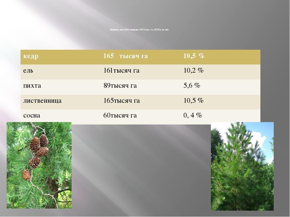 Хвойные леса ЕАО занимают 587,4 тыс. га. (37.2%), из них: кедр 165 тысяч га...