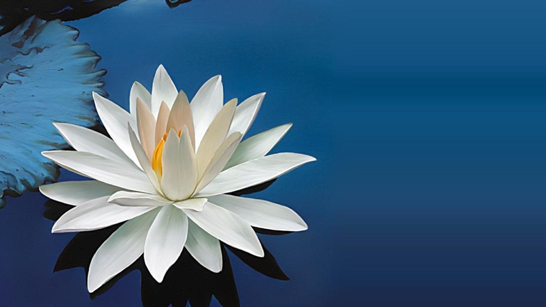 G:\лотос цветок.jpg
