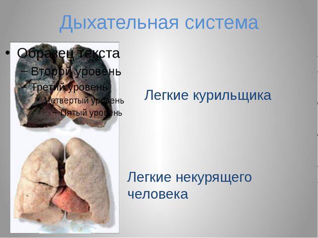 Дыхательная система Легкие курильщика Легкие некурящего человека