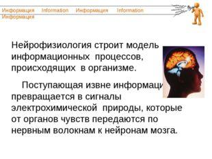 Нейрофизиология строит модель информационных процессов, происходящих в органи