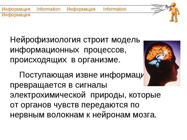 Нейрофизиология строит модель информационных процессов, происходящих в органи...