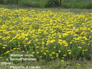 Желтое поле, Белые шляпки торчат. Радость в глазах