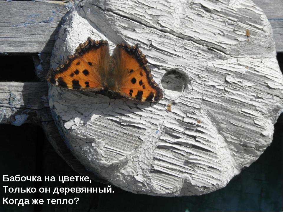 Бабочка на цветке, Только он деревянный. Когда же тепло?