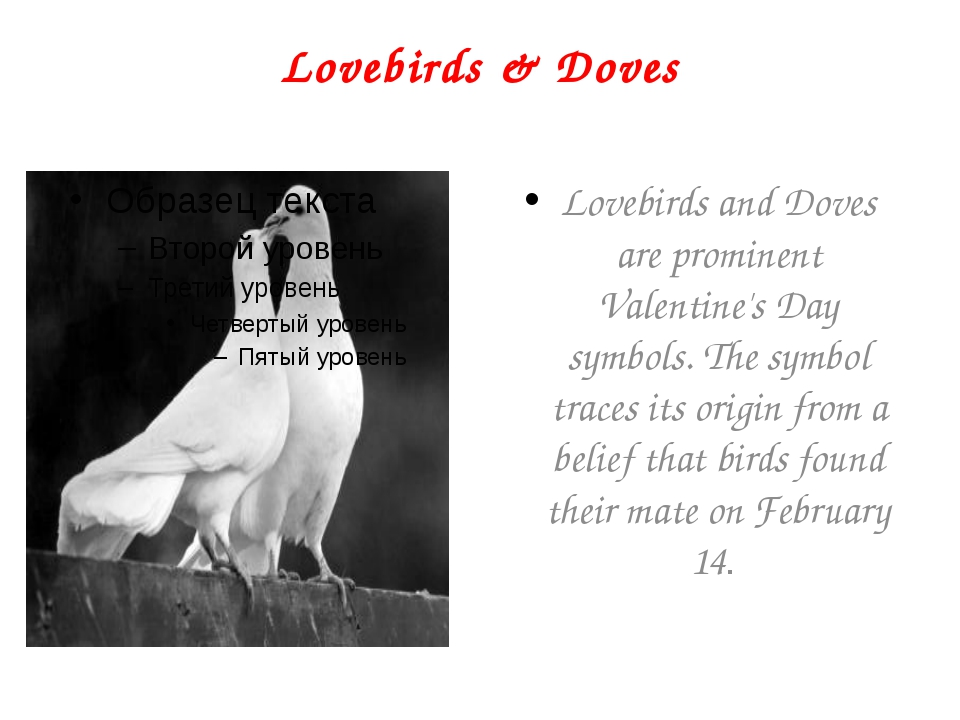Lovebirds & Doves Lovebirds and Doves are prominent Valentine's Day symbols....