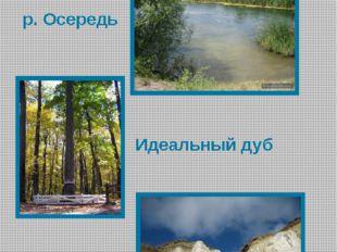 Природа Бутурлиновского района р. Осередь Идеальный дуб Меловые горы
