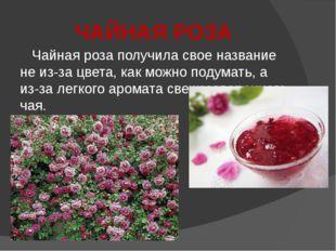 ЧАЙНАЯ РОЗА Чайная роза получила свое название не из-за цвета, как можно поду
