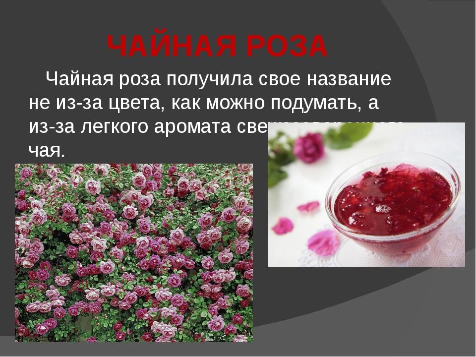 ЧАЙНАЯ РОЗА Чайная роза получила свое название не из-за цвета, как можно поду...