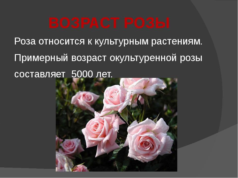 ВОЗРАСТ РОЗЫ Роза относится к культурным растениям. Примерный возраст окульту...