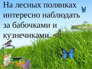 На лесных полянках интересно наблюдать за бабочками и кузнечиками.