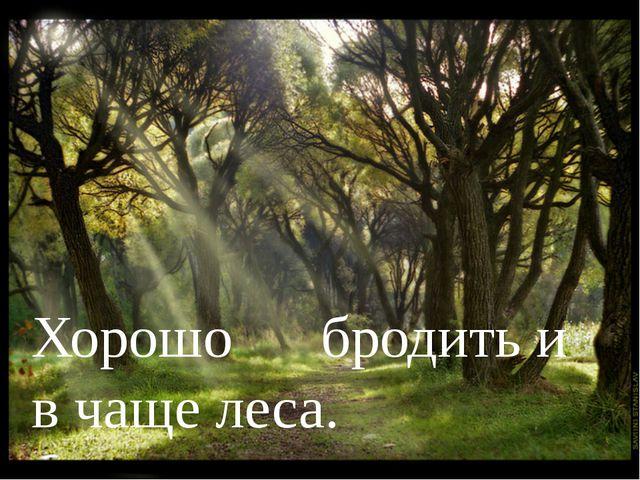 Хорошо бродить и в чаще леса.