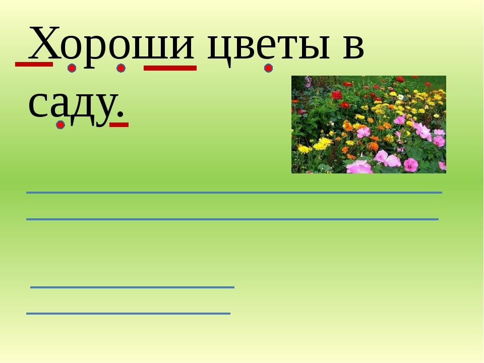 Хороши цветы в саду.
