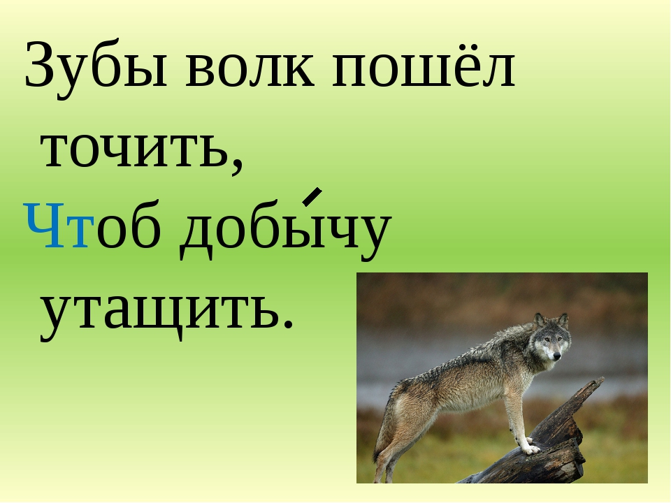 Зубы волк пошёл точить, Чтоб добычу утащить.