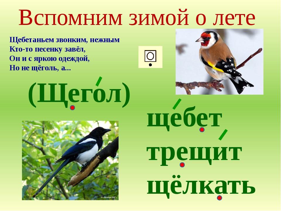 Вспомним зимой о лете Щебетаньем звонким, нежным Кто-то песенку завёл, Он и с...