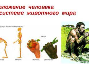 Положение человека в системе животного мира