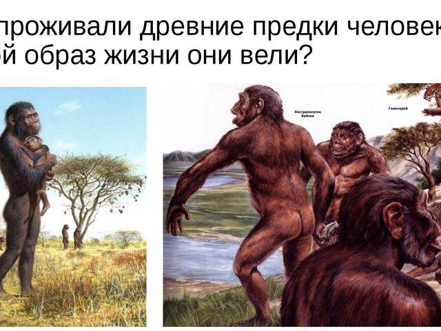 Где проживали древние предки человека? Какой образ жизни они вели?